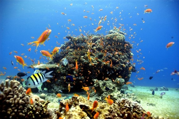 Best ideas about Underwater Photographer on Pinterest     International Essay Contest for Young People Sib Sankar Deb  International Essay  Contest for Young People Sib Sankar Deb