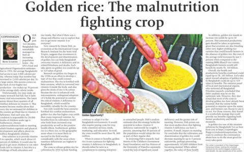 Golden rice: The malnutrition fighting crop image
