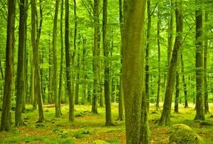 Protecting and Planting Forests image